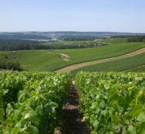 """""""Coteaux, maisons et caves de Champagne"""" -UNESCO's world heritage"""
