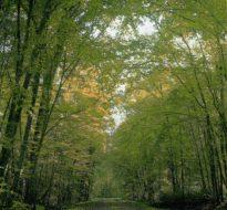 Congrès de la Fédération nationale des Communes forestières